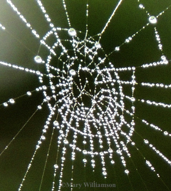 SpiderWeb1 Silent Sunday: Web Sites