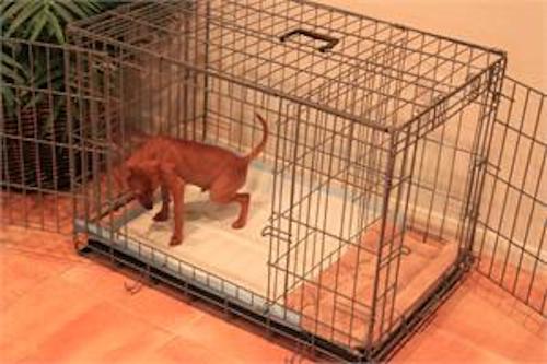 Puppy Apartment