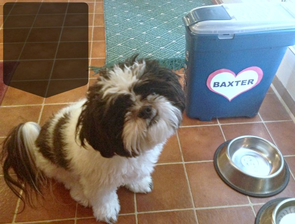 Baxter and his Crooked Smile #ProPlanPet