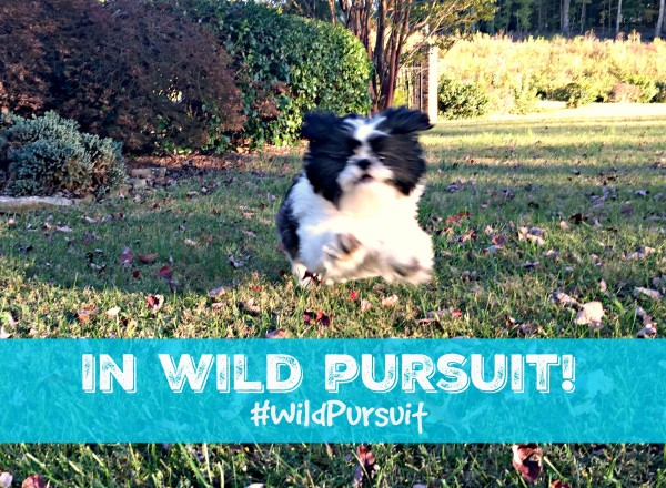 Natural Balance Wild Pursuit gives our dog energy, providing a high protein diet