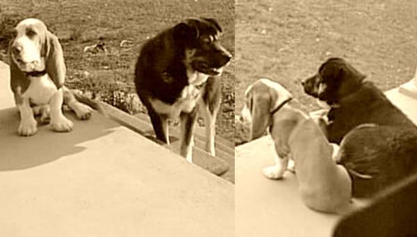 Wisdom Panel 3.0 dog dna testing mixed breed