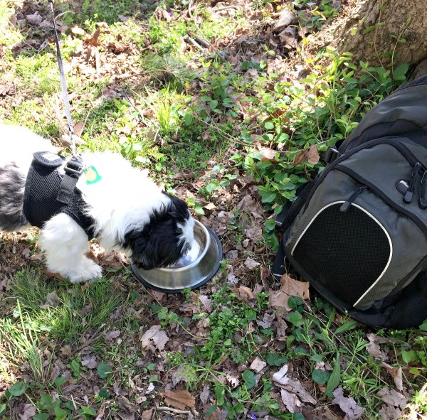 Ways to keep your dog fit and safe on trails. Keep water available #RememberBeyond