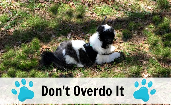 Keep your dog safe in the sun by not letting dogs overheat or overdo it #IRememberBeyond