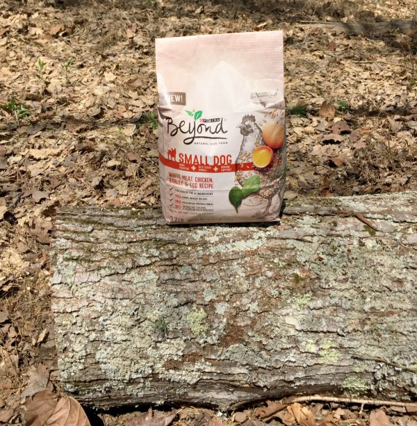 Ways to keep your dog fit and safe on trails. Feed your dog good for them dry dog food like Purina Beyond Small Dog Essentials. #RememberBeyond