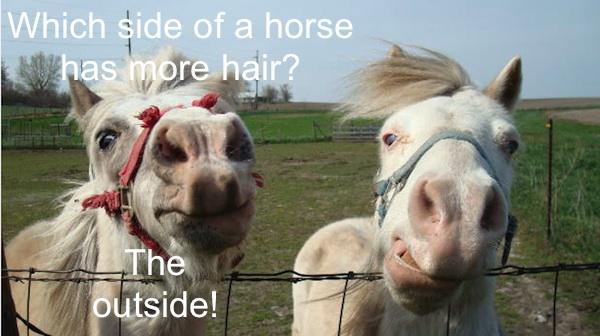 Horse jokes - photo#26