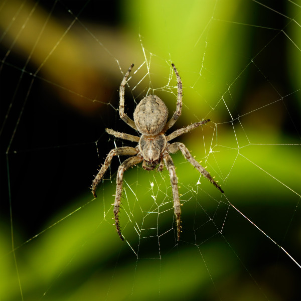 a spider named Yeast Infection