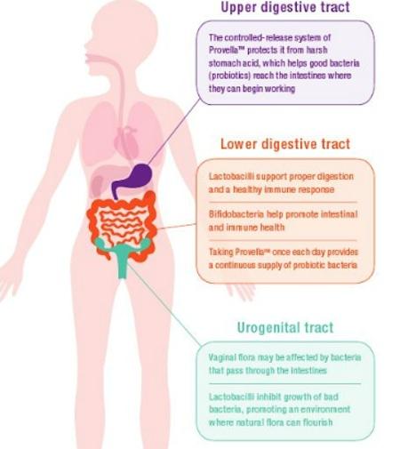 ProvellaReviewImage provella probiotics