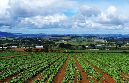 VegetableGardenGP saving money by growing vegetables