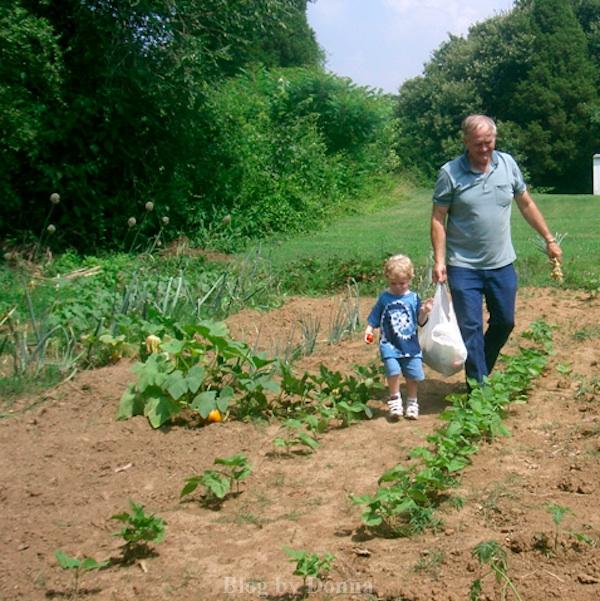saving money gardening
