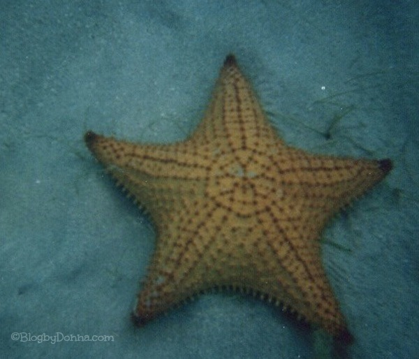 Virgin Island snorkeing star fish caribbean