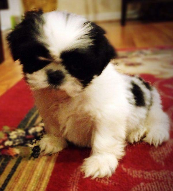 Baxter 7 weeks