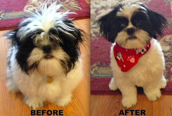 Baxter Before and After Grooming