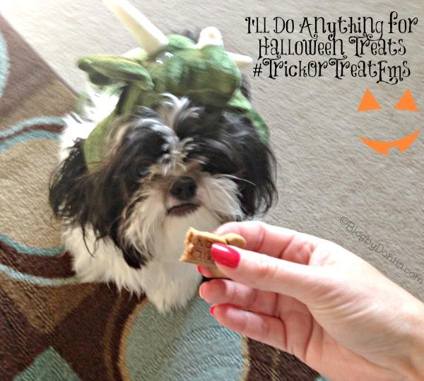 Halloween Pet Treats for Baxter #TrickorTreatEm #collectivebias #cbias #shop