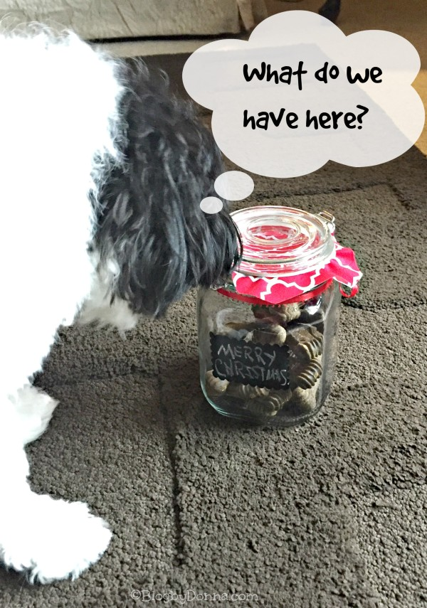 Baxter checking out treat jar
