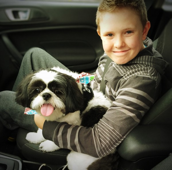 Show your pet you love them by grooming them