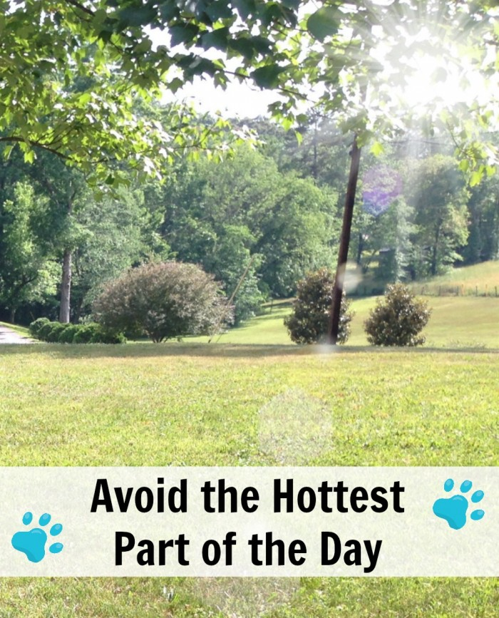 Ways to keep your dog safe this summer - avoid the hottest part of the day...