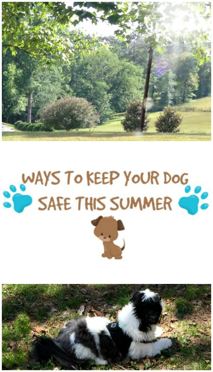 Ways to keep your dog safe this summer...