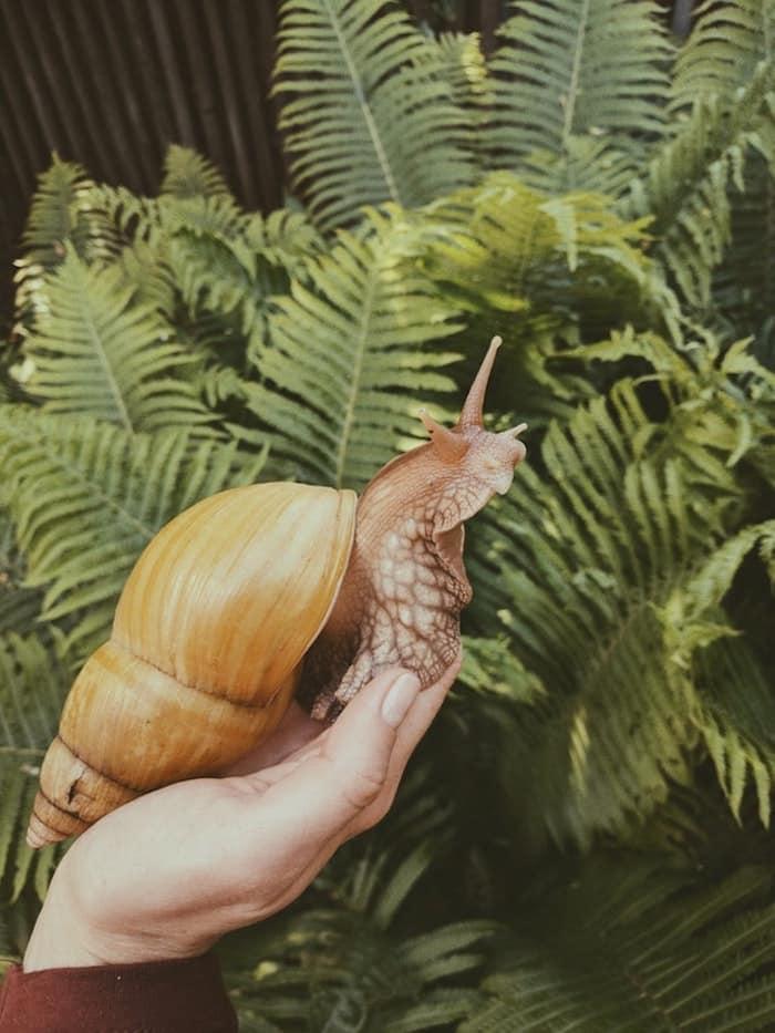 snail's slime