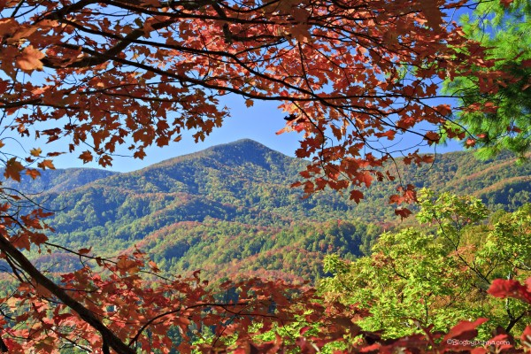 Smoky Mountains in the Fall 1