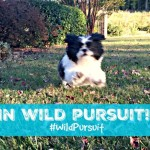 Natural Balance Wild Pursuit Healthy Dog Treats