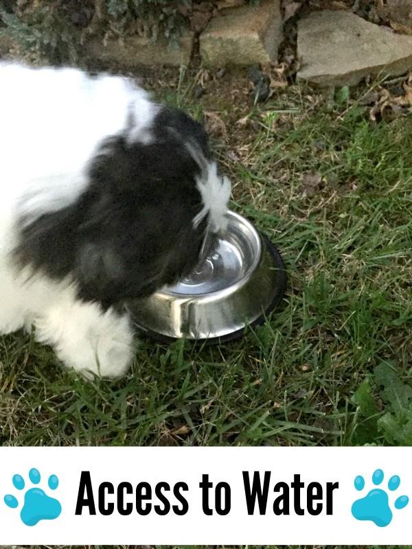 let your dog drink plenty of water